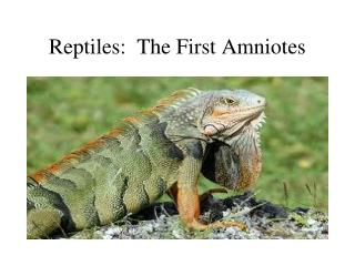 Reptiles:  The First Amniotes