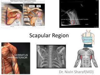 Scapular Region