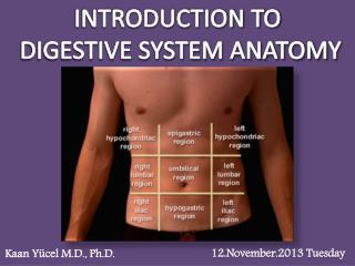 INTRODUCTION TO DIGESTIVE SYSTEM ANATOMY