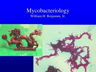 Mycobacteriology William H. Benjamin, Jr.