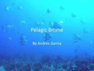 Pelagic Biome