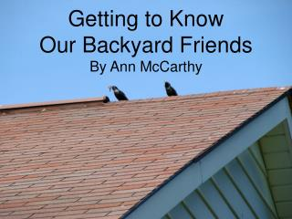 Getting to  Know Our  Backyard Friends By Ann McCarthy