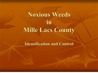 Noxious Weeds  in  Mille Lacs County  Identification and Control