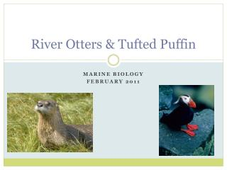 River Otters & Tufted Puffin
