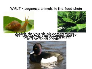 WALT – sequence animals in the food chain