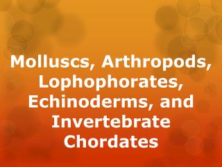 Molluscs , Arthropods,  Lophophorates , Echinoderms, and Invertebrate Chordates