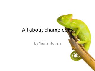 All about chameleons