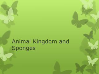 Animal Kingdom and Sponges