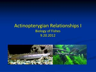 Actinopterygian Relationships I Biology of Fishes 9.20.2012