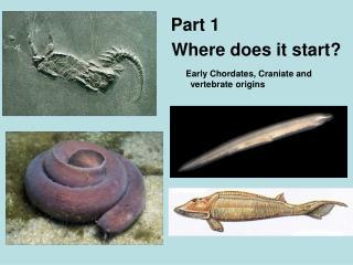 Early Chordates, Craniate and vertebrate origins