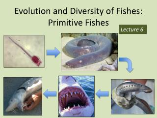 Evolution and Diversity of Fishes: Primitive Fishes