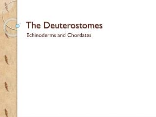 The  Deuterostomes