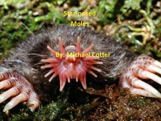 Star-nosed                                              Moles         By : Michael Cotter