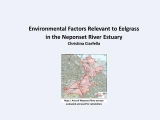 Environmental Factors Relevant to Eelgrass in the Neponset River Estuary Christina  Ciarfella