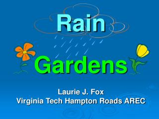 Rain Gardens Laurie J. Fox Virginia Tech Hampton Roads AREC