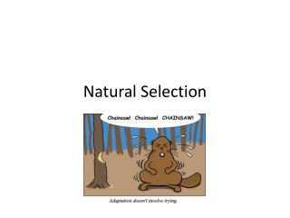 Why Does Natural Selection Work On Phenotype Rather Than Genotype