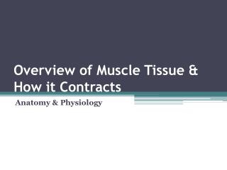 Overview of Muscle Tissue & How it Contracts