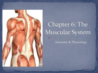Chapter 6: The Muscular System