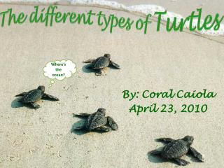The different types of  Turtles