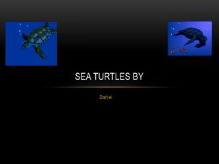 Sea Turtles by