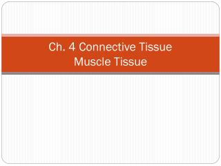 Ch. 4 Connective Tissue Muscle Tissue