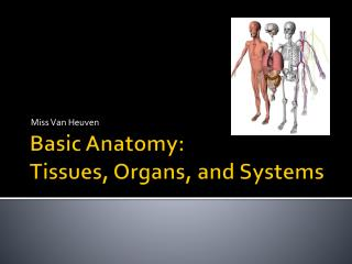 Basic Anatomy: Tissues, Organs, and Systems