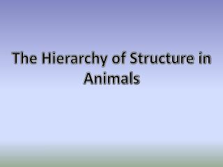 The Hierarchy of Structure in Animals