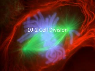 10-2 Cell Division