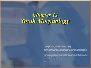 Chapter 12 Tooth Morphology