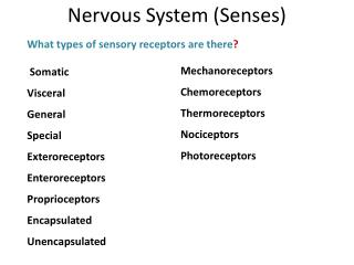 What types of sensory receptors are there ?