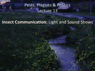 Pests, Plagues & Politics Lecture 13 Insect Communication:  Light and Sound Shows