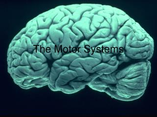 The Motor Systems