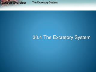 30.4 The Excretory System