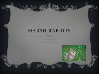 Marsh Rabbits