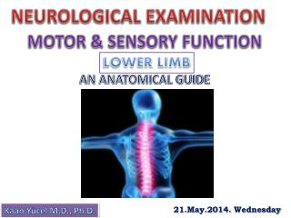 NEUROLOGICAL EXAMINATION