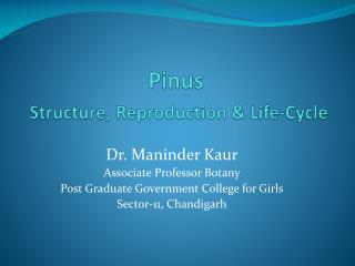 Pinus Structure, Reproduction & Life-Cycle