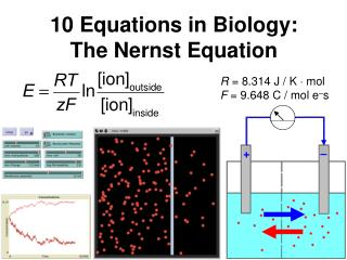 10 Equations in Biology: The Nernst Equation