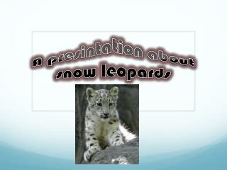 A  presintation  about snow leopards