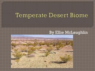 Temperate Desert Biome