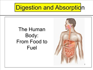 The Human Body: From Food to Fuel