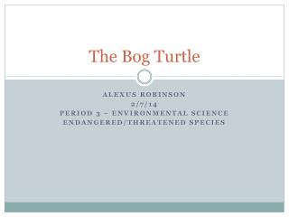The Bog Turtle