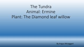 The Tundra Animal: Ermine Plant: The Diamond leaf willow