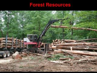 Forest  Resources