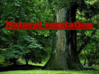 Natural vegetation
