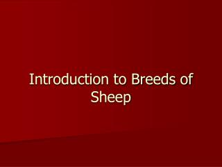 Introduction to Breeds of Sheep