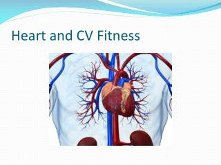 Heart and CV Fitness