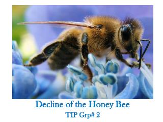 Decline of the Honey Bee TIP  Grp # 2