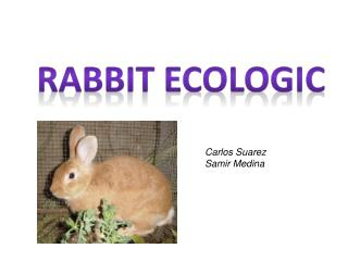 Rabbit Ecologic