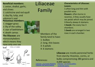 Liliaceae  Family