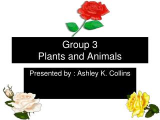 Group 3 Plants and Animals